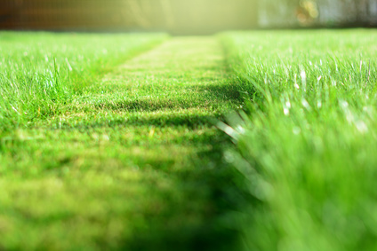 Baby Boomers and Lawn Care